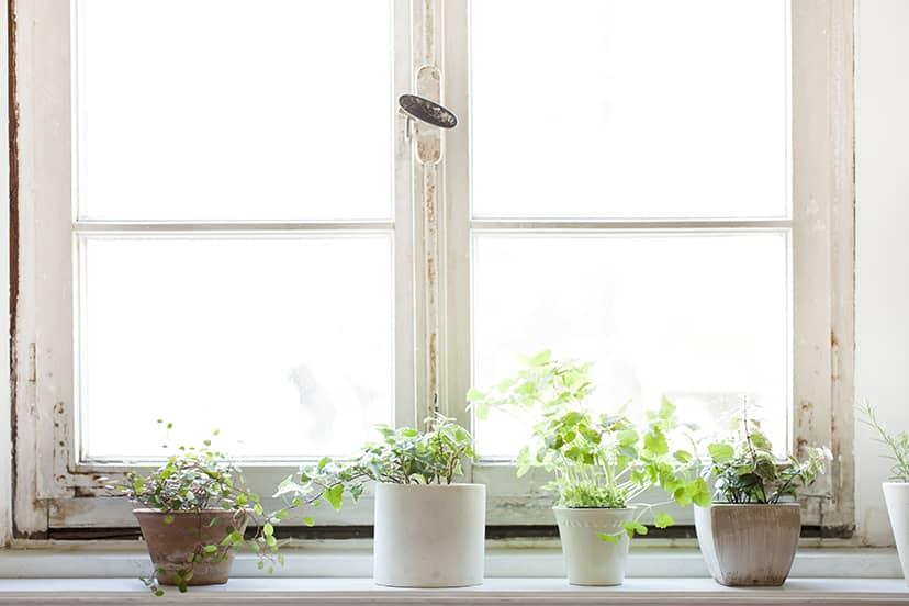 家で育てる植物